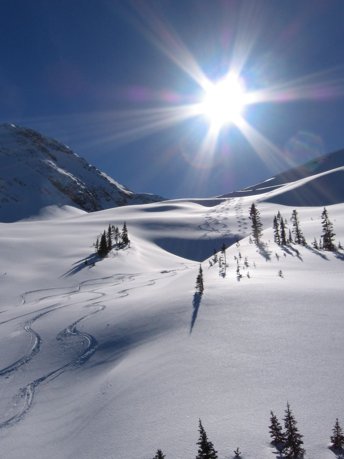bearpaw heli-skiing powder skiing